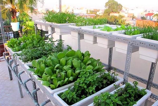 Thiết kế nên vườn rau sạch