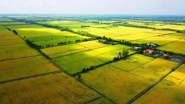 Đất nông nghiệp phục vụ cho các ngành sản xuất lương thực, thực phẩm.